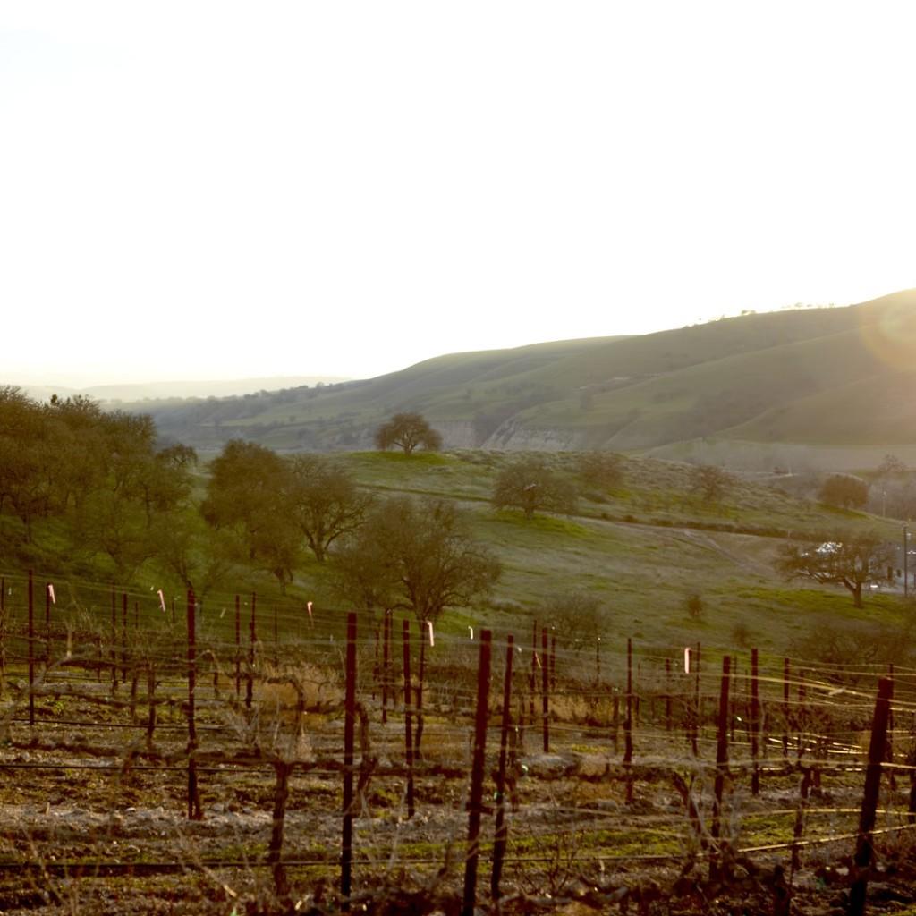 Pianetta Winery