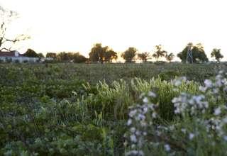 Summerset Farm