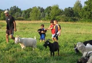 Laughing Goat Fiber Farm