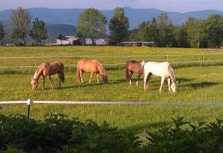 Scenic Catskill Mtn Farm