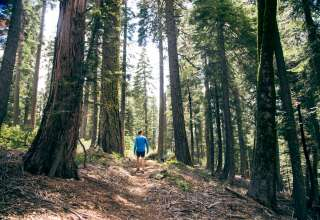 Victoria Forest