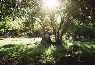 Buffalo Dream Ranch