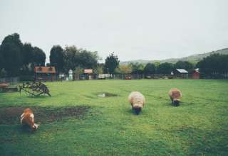 Windsor Family Farm