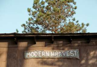 Modern Harvest Farms
