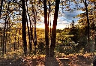 Silverbell Wood