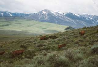 Ellison Ranch