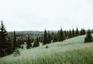 Elmcrest Acres