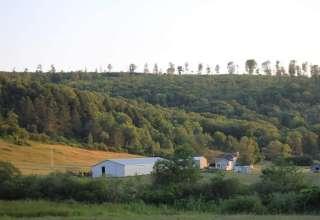 Triple Dream Farm