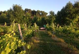 Prairie Woods Farm Vineyards