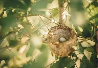 Hawk Nest Mushroom Farm