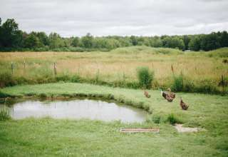 Flannel Dog Farm