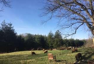 Heart Song Farm