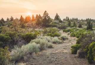 Mystical Mount Shasta