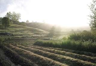 Free Verse Farm & Apothecary