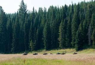 Diamond P Camp West Yellowstone