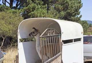 Big Mesa Farmstead