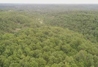 Niangua Valley Forest