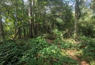 Kudzu Paradise