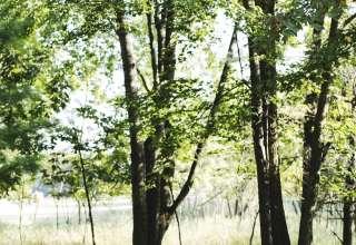 Edenwood Ranch & Preserve