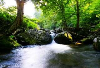 Mandala Springs