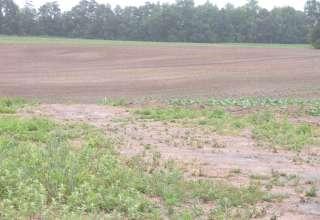 Dinwiddie Farms