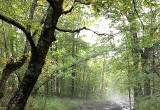Bold Paths Retreat land