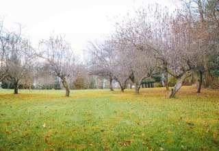 Apple Tree Hills