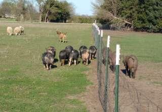 Hollister Farms