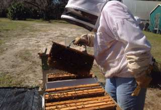 Good Karma Honey Bee BnB Farm