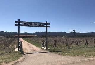 Bruzzi Vineyard