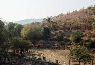 Rancho Palomino Santa Barbara