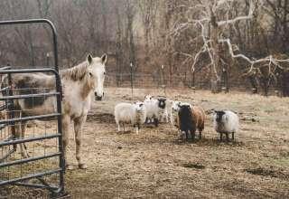 Beacon Farm Ministries
