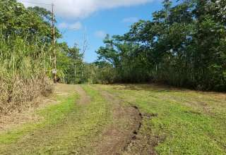 SJ's Nanawale Forest Reserve