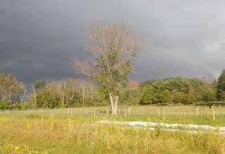 Greene Kitchen Farm