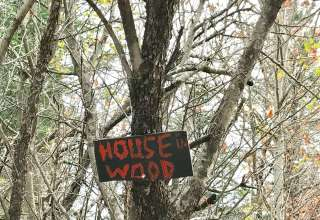 Off-Grid in the Guildhall Woods