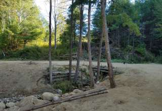 Petersville Forrest
