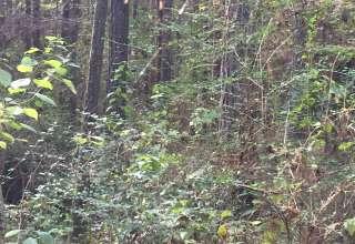Camp Noah Cypress Creek