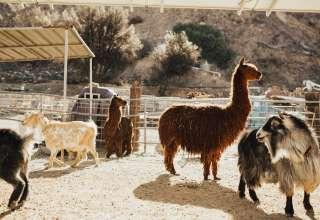 Reptacular Ranch Zoo