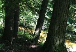 Bear Lake Meets the Yellow Dog