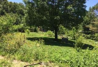 Towering Oaks at White Raven