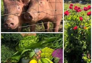 Conscious Earth Farm