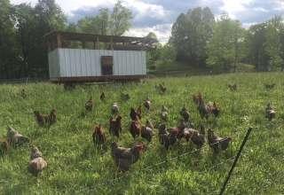 Kickin' Grass Farm