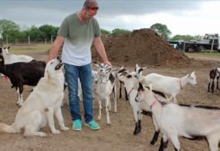 Goats Gone Wild!