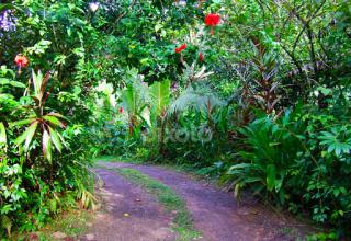 Magical Maui Waterfall, Gardens