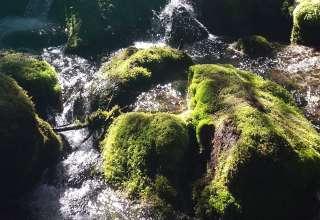 Alaskan Wilderness Wonderland