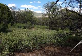 Daniel S.'s Land