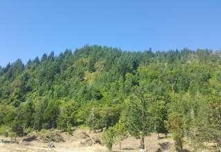 Forest Edge Farms