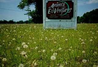 Animal Sanctuary and Peace Park