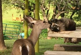 Animal Lovers Paradise