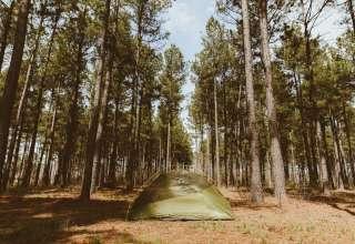 Pristine Pines